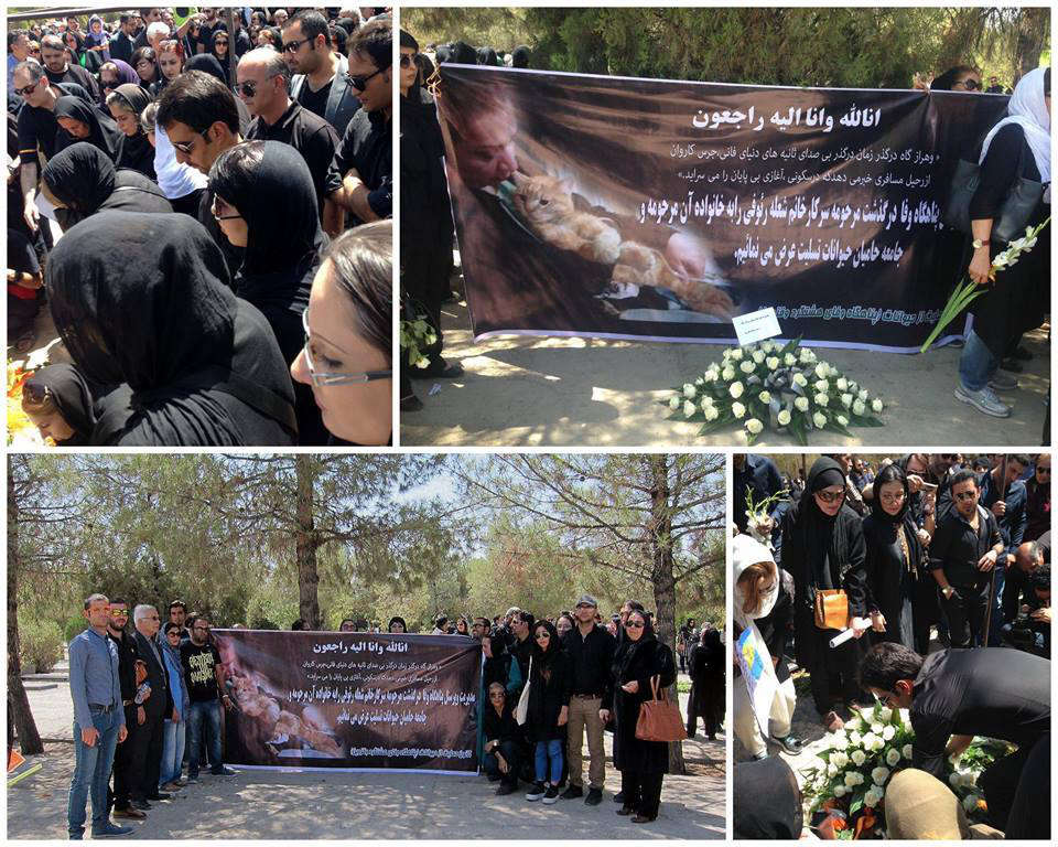 Iranian cat rescue memorial and tribute
