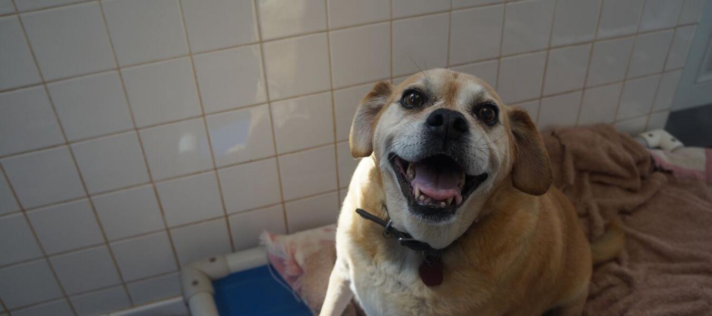 Houston -- beige dog