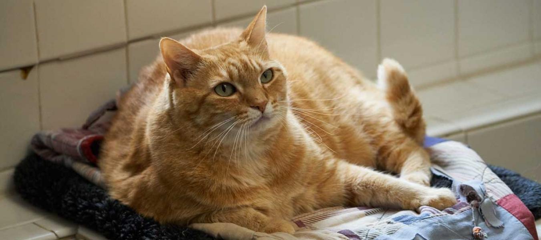 Minnie an orange tabby cat laying in window seat