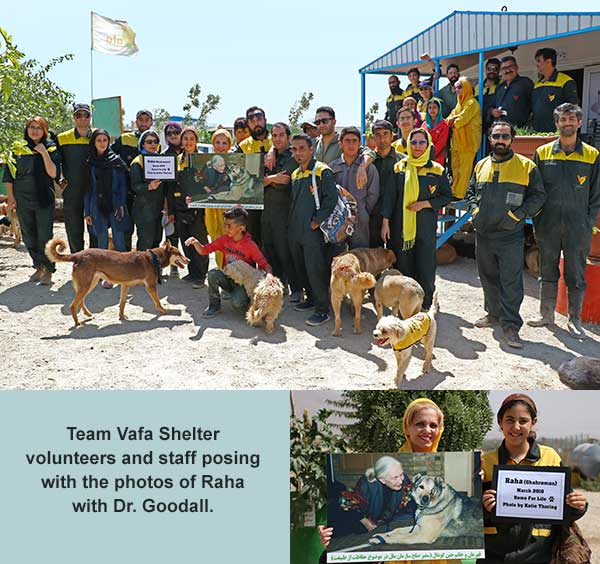 Team Vafa Shelter volunteers and staff posing with the photos of Raha with Dr. Goodall.